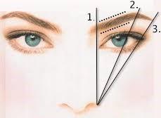 Определим координаты для каждой брови